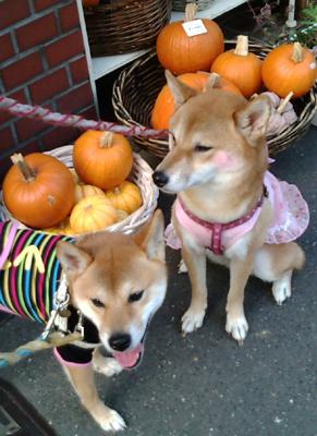 20120929もれなくかぼちゃ