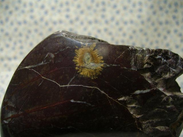 根尾菊花石(黄金菊)
