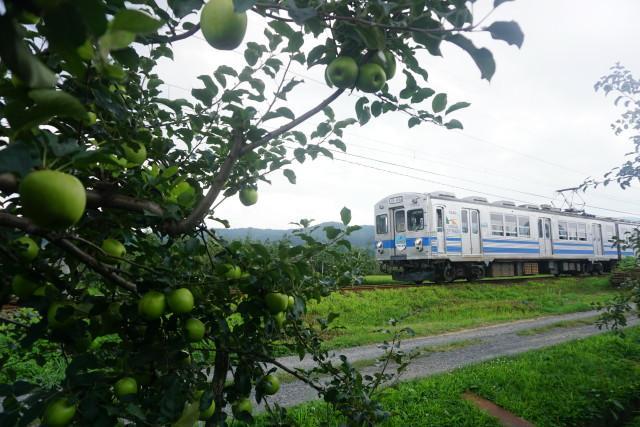 残暑の 弘南鉄道 大鰐線6