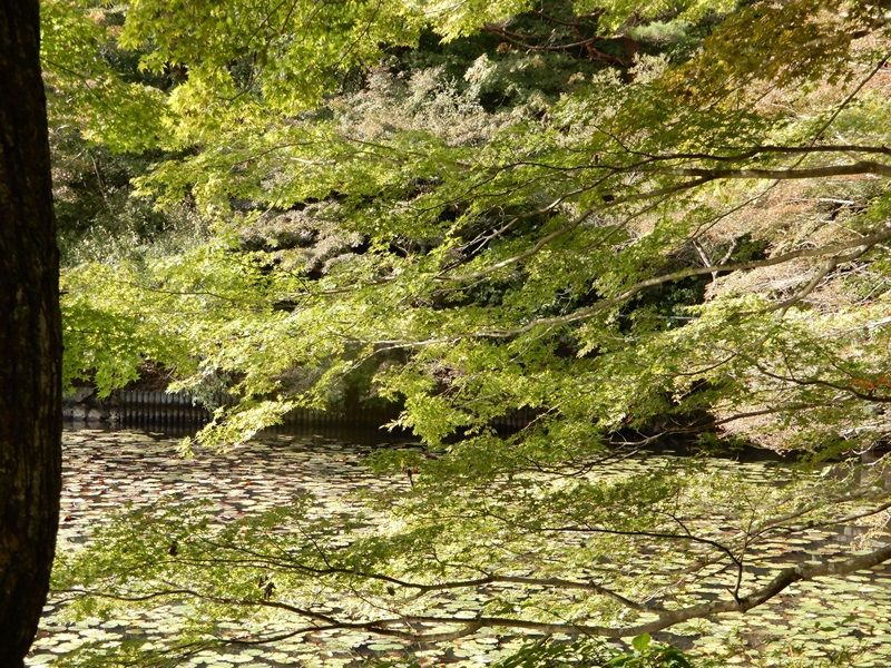 長谷池11