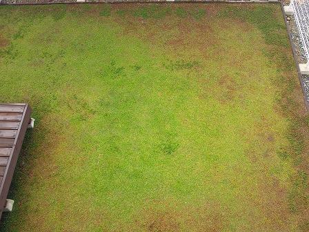 クラピアの12月の定点観測画像1