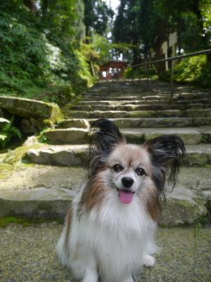 2012京都夏2−31.JPG