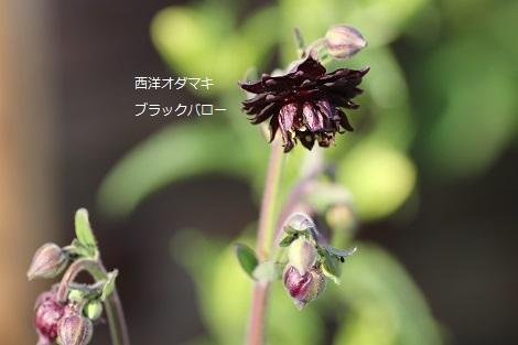 2014_0424_171705-IMG_4787.JPG