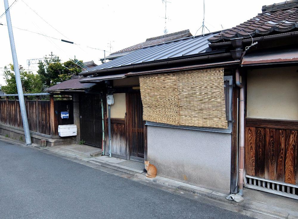 京都 伏見稲荷 猫 ネコ 京都の町家