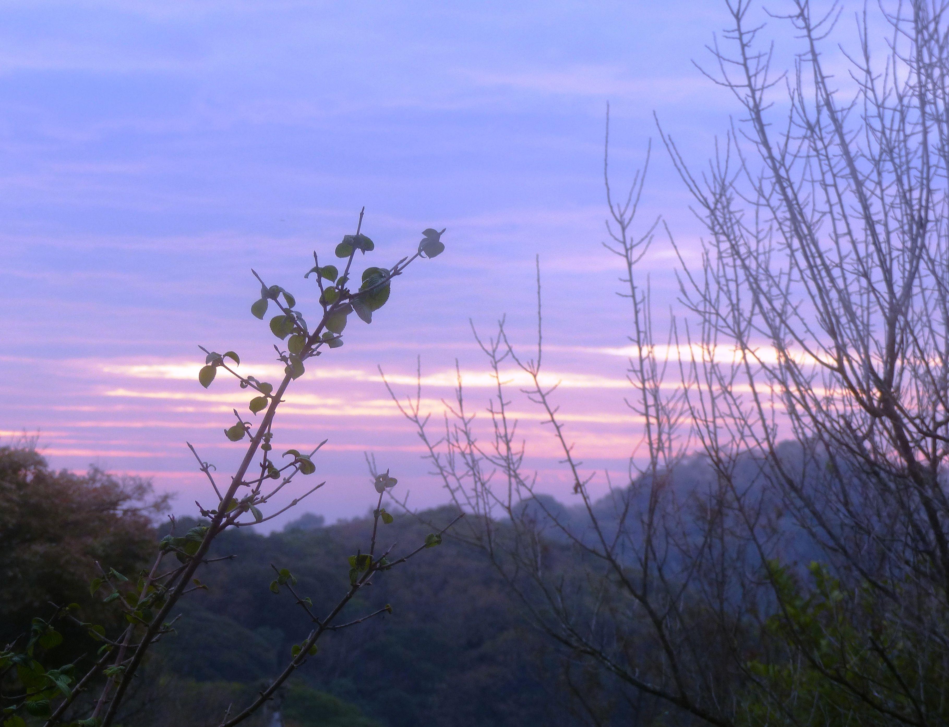 早朝の空が 水彩画のように! | オープンガーデン - 楽天ブログ