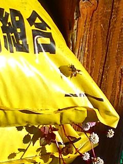 堆肥とミツバチ