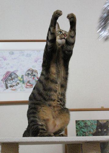 タワー猫3.jpg