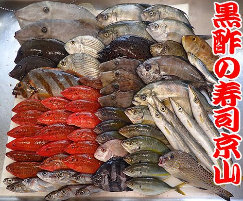 鮮魚 寿司 出前 未利用魚