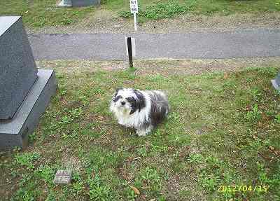 お婆ちゃんのお隣のお墓の前で座る僕