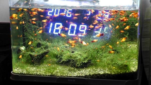 水槽 プラティ ウィローモス 照明 時計