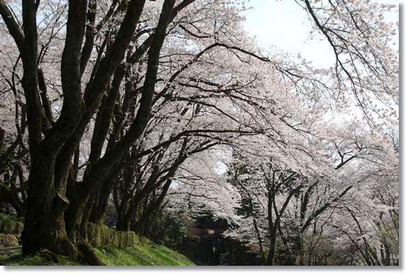 樹木公園-75 16.4.9