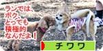 sekkyokuteki banner.JPG