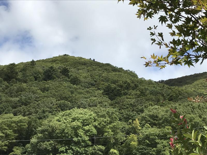 台風後の醍醐山整備登山(1)   ...