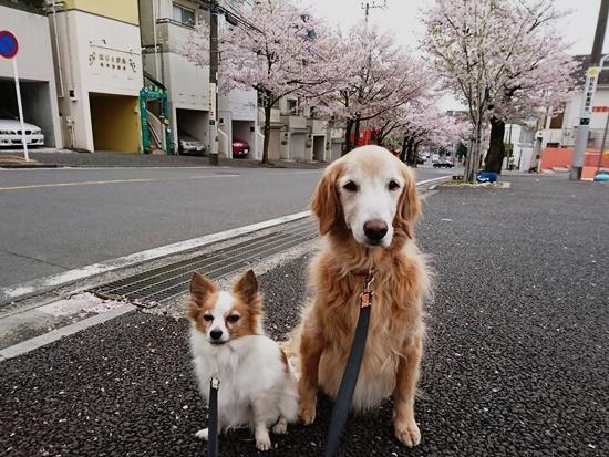 2017-0416-04(4.10桜台).jpg