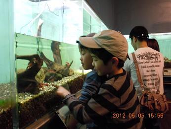 2012年5月5日  富士湧水の里水族館.jpg