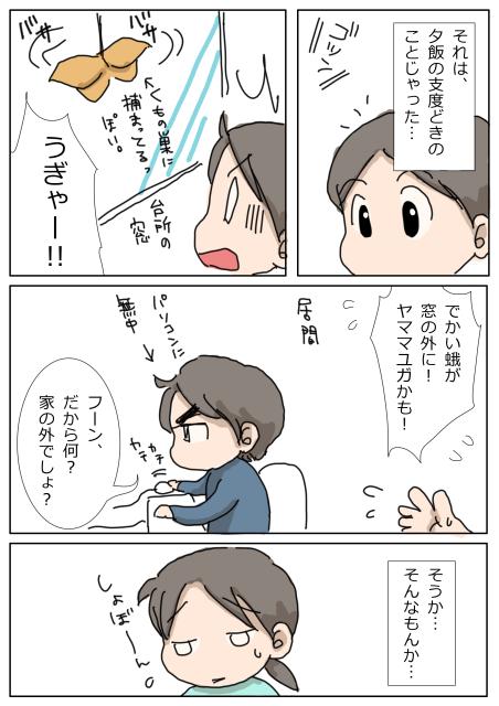 ヤママユガ1