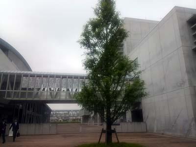 横浜SFH