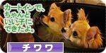 iiko banner.JPG