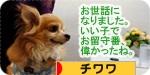 orusuban banner.JPG