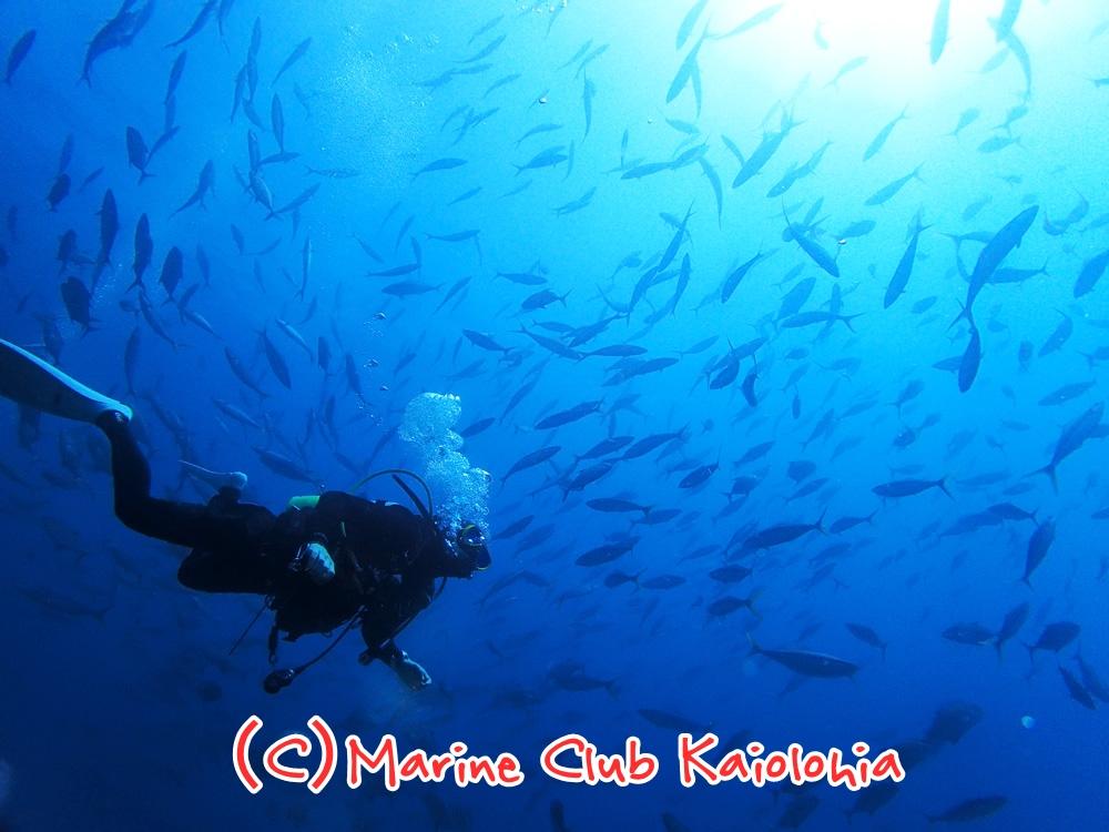屋久島ダイビング