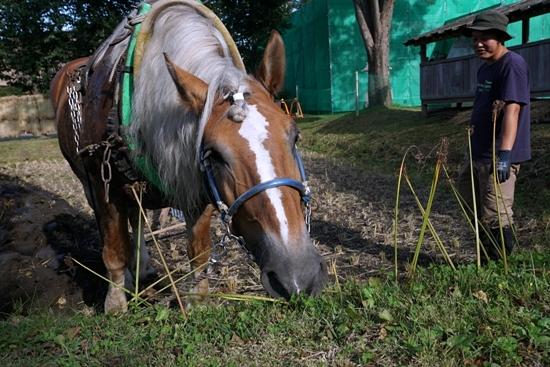 道草を食う馬