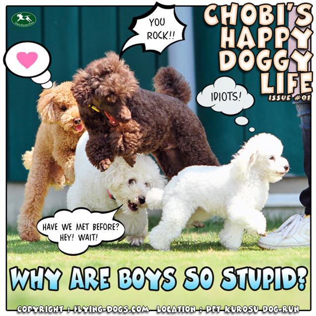 ChobiPhotoComic01stupidboys[1].jpg