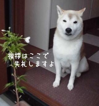 0411子孫sakura4.jpg