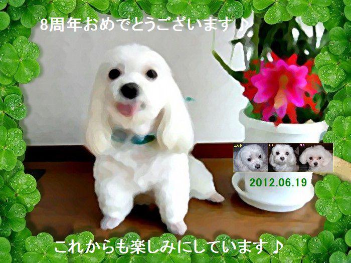 開設8周年_ekubo19さん