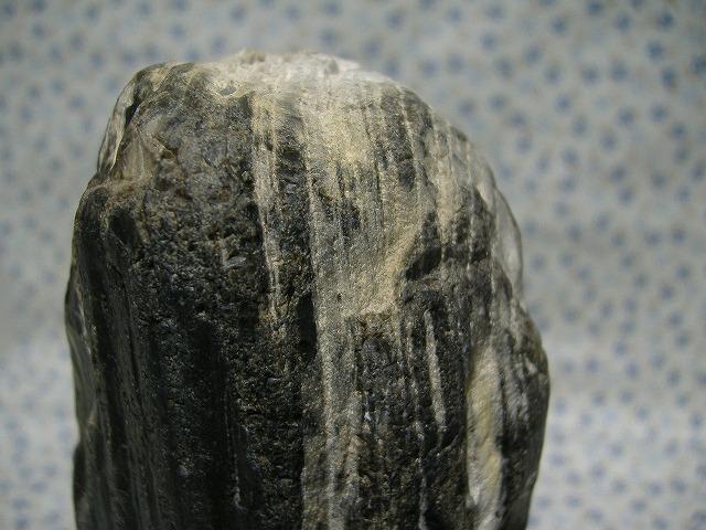 土岐 珪化木