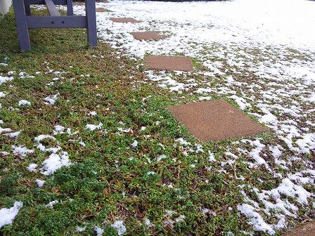 雪とロンギカウリス1