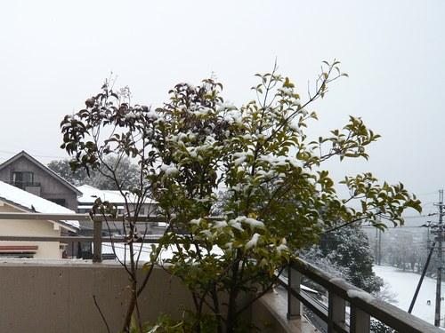 1雪景色5003.jpg