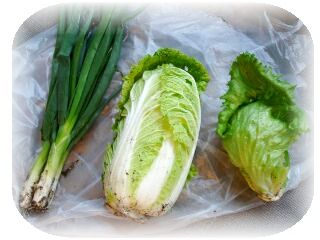 ネギ 白菜 レタス