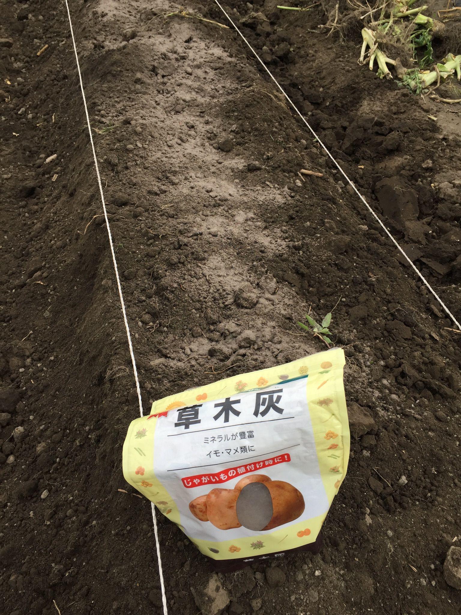 サツマイモ 土作り