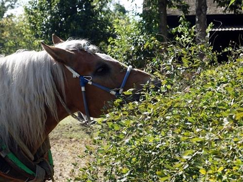 馬は萩の葉が好き