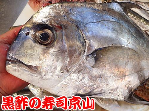 寿司 出前 葛飾区 西新小岩.jpg