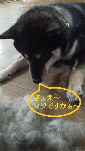 毛玉 (1).jpg