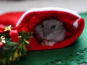 マリンちゃんクリスマス