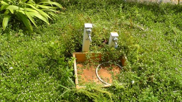井戸、立水栓まわり