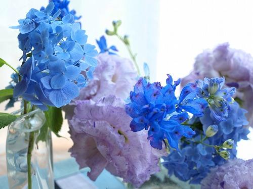 H24.6-紫陽花&マリンブルー.jpg