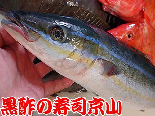 江戸川区新堀に美味しいお寿司を宅配します!