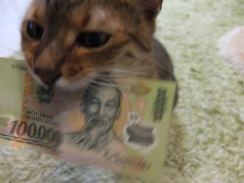 ベトナム ドン 通貨 ホーチミン 両替