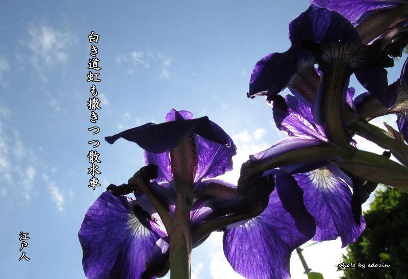 虹6 | 江戸人の俳散歩 - 楽天ブ...