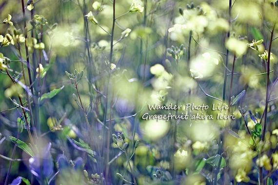 IMG_0843のコピー.jpg