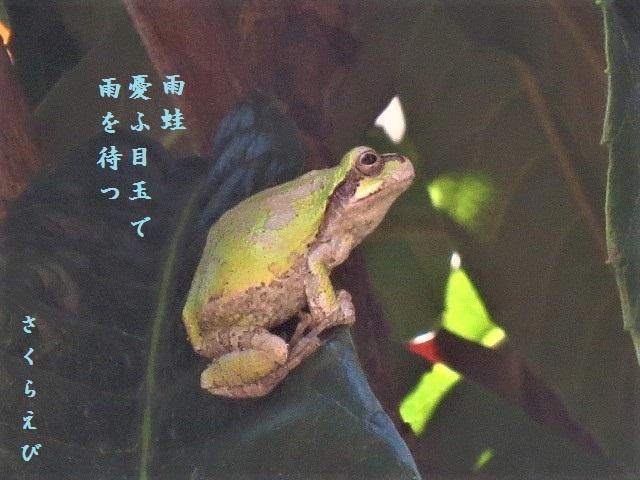 IMG_3463okblog46.jpg