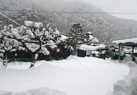 雪の様子.jpg