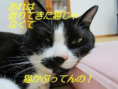 IMG_6947.jpg