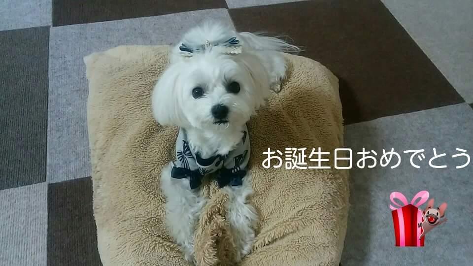 FB_ノエル2歳_喜多千江乃さん
