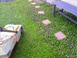 クラピア花の刈り込み