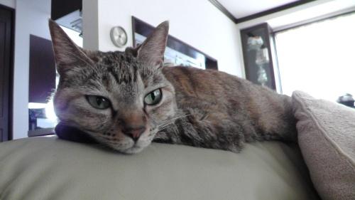 うちに猫が来てから3年