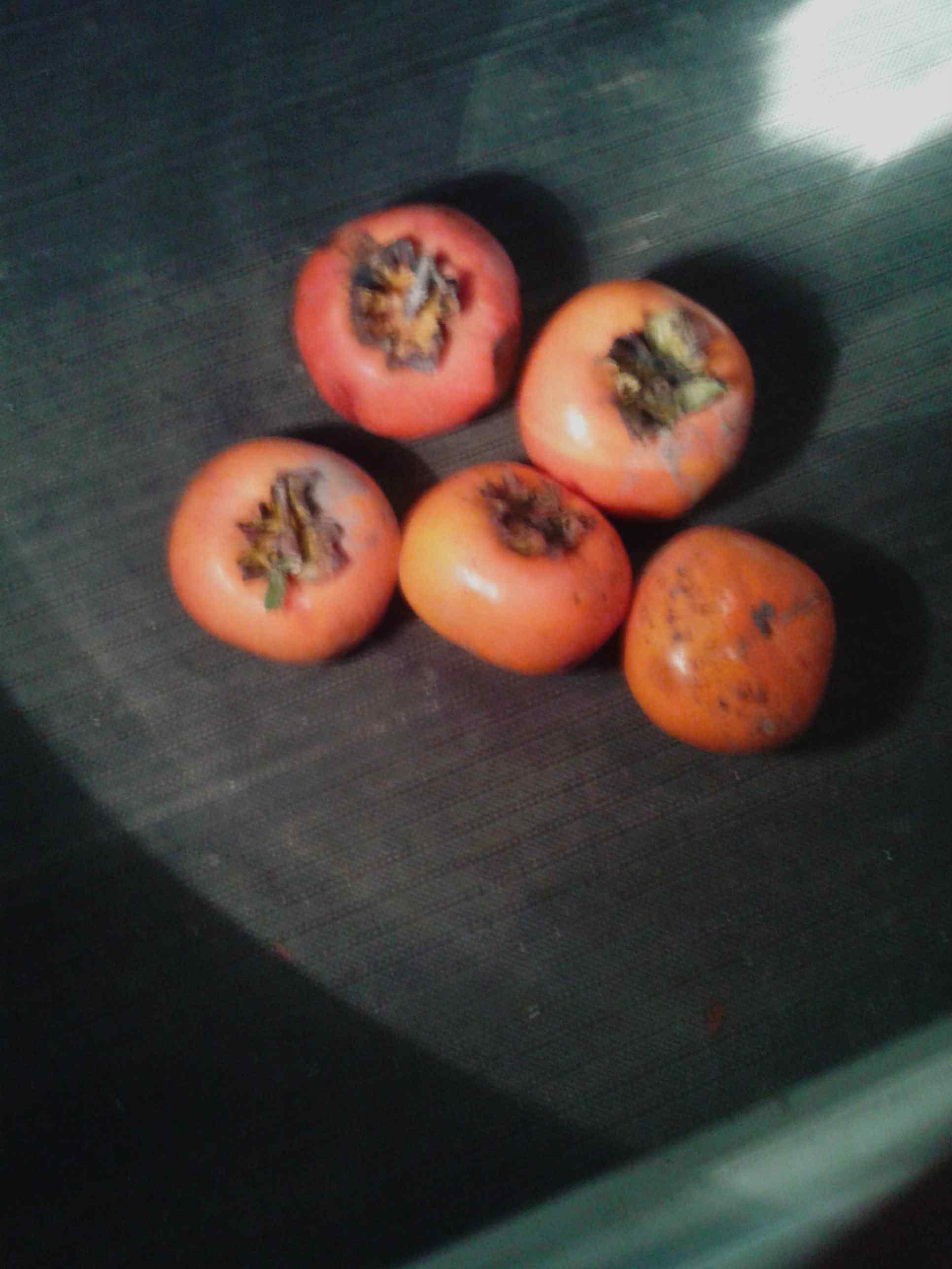 2017.10.23(月)の柿の収穫その2